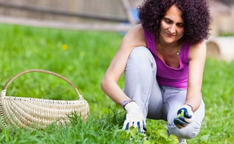 Крапива и все о ней - свойства, виды, лечение, блюда, использование